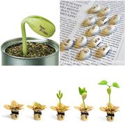 Волшебные бобы с гравировкой (10 семян). Живые открытки для близких,  с